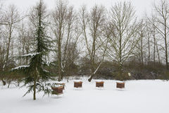 Neve ed apicoltura Fotografia Stock Libera da Diritti
