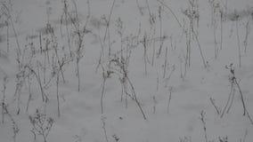 Neve ed arbusti stock footage