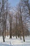 Neve em árvores Foto de Stock Royalty Free