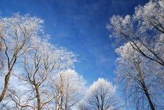 Neve em árvores no inverno Imagens de Stock Royalty Free