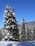 Neve em abetos Foto de Stock