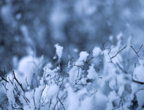 Neve em filiais Fotografia de Stock