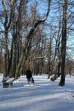 Neve em Normafa, Budapest, Hungria Imagem de Stock Royalty Free
