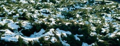 Neve em plantas imagens de stock