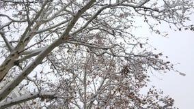 Neve em ramos na floresta imagens de stock