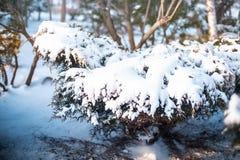 Neve em Tirana Fotografia de Stock Royalty Free