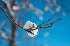 Neve em um ramo Fotos de Stock Royalty Free