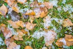 Neve em uma grama verde e em uma folha amarela Imagens de Stock Royalty Free