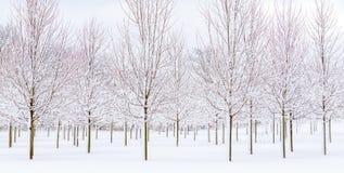 A neve embalada cobriu árvores Foto de Stock Royalty Free
