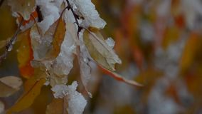 A neve encontra-se em coloridas, folhas de outono video estoque