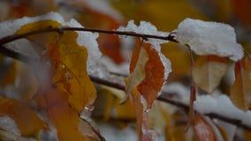 A neve encontra-se em coloridas, folhas de outono filme
