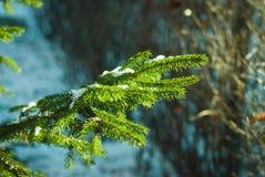 A neve encontra-se em um ramo do abeto em um dia ensolarado Fotografia de Stock