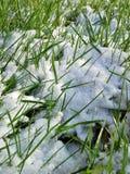 Neve entre a grama Fotografia de Stock