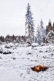 Neve, floresta e incêndio imagens de stock