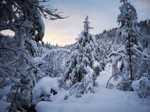 Neve in foresta immagine stock