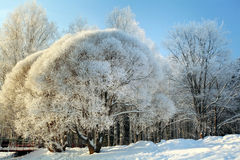 Neve fredda Russia del paesaggio della foresta di inverno Fotografie Stock