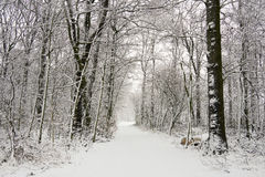 Neve fresca Imagens de Stock Royalty Free