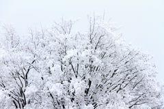 Neve fresca nas partes superiores da árvore imagem de stock royalty free