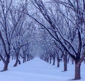 Neve fresca no bosque da árvore imagem de stock royalty free