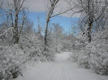 Neve fresca sulla traccia Fotografia Stock
