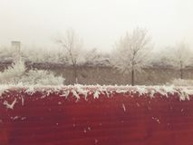 Neve Frost Fotografia de Stock Royalty Free