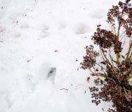Neve fusa con il cespuglio asciutto Sporcizia e neve Sabbia e neve Fondo Struttura al suolo con il ramo ed il ramoscello nello sp fotografia stock libera da diritti
