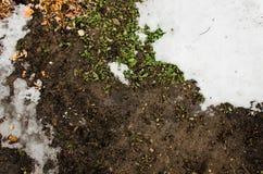 Neve fusa su un campo Sporcizia e neve Sabbia e neve Fondo Struttura al suolo con il ramo ed il ramoscello nello sping Immagine Stock Libera da Diritti