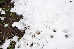 Neve fusa su un campo Sporcizia e neve Sabbia e neve Fondo Struttura al suolo con il ramo ed il ramoscello nello sping Fotografie Stock Libere da Diritti