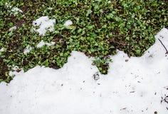 Neve fusa su un'erba del grenn del campo Sporcizia e neve Sabbia e neve Fondo Struttura al suolo con il ramo ed il ramoscello den fotografia stock