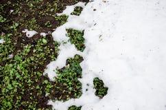 Neve fusa su un'erba del grenn del campo Sporcizia e neve Sabbia e neve Fondo Struttura al suolo con il ramo ed il ramoscello den immagine stock libera da diritti