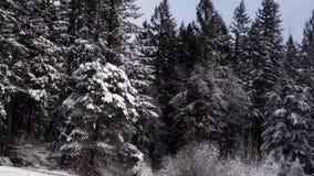 Neve grossa em árvores de floresta na manhã ensolarada no inverno video estoque