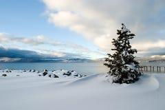 Neve Lake Tahoe da árvore Imagem de Stock