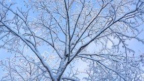 Neve lanuginosa sui rami dell'albero Immagine Stock Libera da Diritti