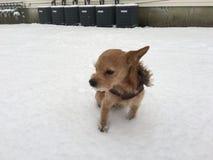 Neve loving do cão Imagens de Stock
