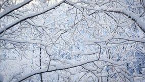 Neve macia em ramos na floresta do norte Fotos de Stock Royalty Free