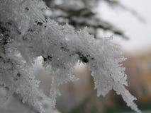 Neve macro no ano novo três Imagens de Stock