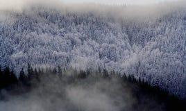 Neve in montagna di inverno degli alberi Fotografia Stock