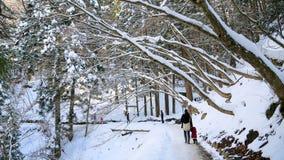 Neve in montagne del Giappone Fotografie Stock Libere da Diritti