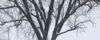 Neve na árvore foto de stock royalty free