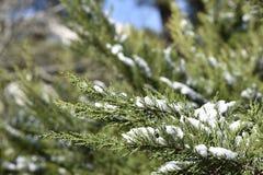 Neve na árvore de pinho fotos de stock
