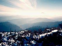 Neve na florescência vermelha do arbusto da urze no penhasco no parque Campo montanhoso com o vale longo completo da névoa do out fotografia de stock royalty free