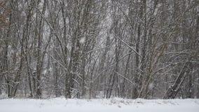 Neve na floresta video estoque