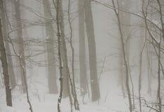 Neve na floresta fotografia de stock