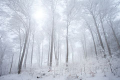 Neve na floresta do inverno Fotografia de Stock Royalty Free