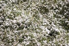 Neve na grama Imagem de Stock