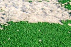 Neve na grama Fotos de Stock