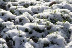 Neve na grama verde na natureza Fotos de Stock Royalty Free