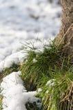 Neve na grama verde na natureza Foto de Stock