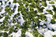 Neve na grama verde na natureza Imagem de Stock