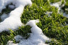 Neve na grama verde na natureza Fotografia de Stock